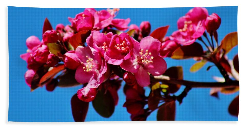 Wildlife Hand Towel featuring the photograph Pink Blossoms Closeup 031015ab by Edward Dobosh