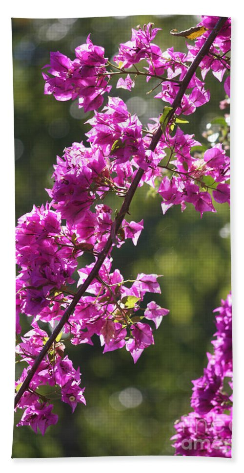 Pink Bath Sheet featuring the photograph Pink Bougainvillea Sunshine by Carol Groenen