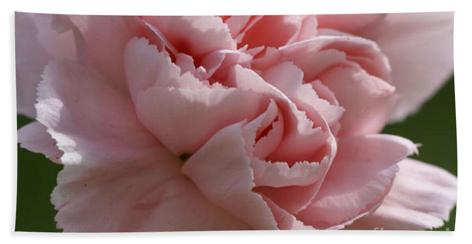 Pink Bath Sheet featuring the photograph Pink Carnation by Carol Lynch