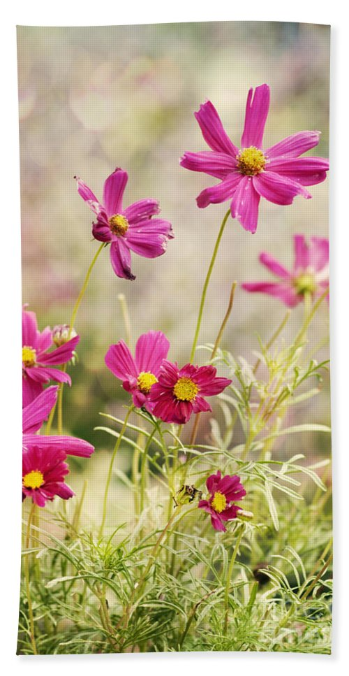 Asteraceae Hand Towel featuring the photograph Pink Cosmos by Juli Scalzi