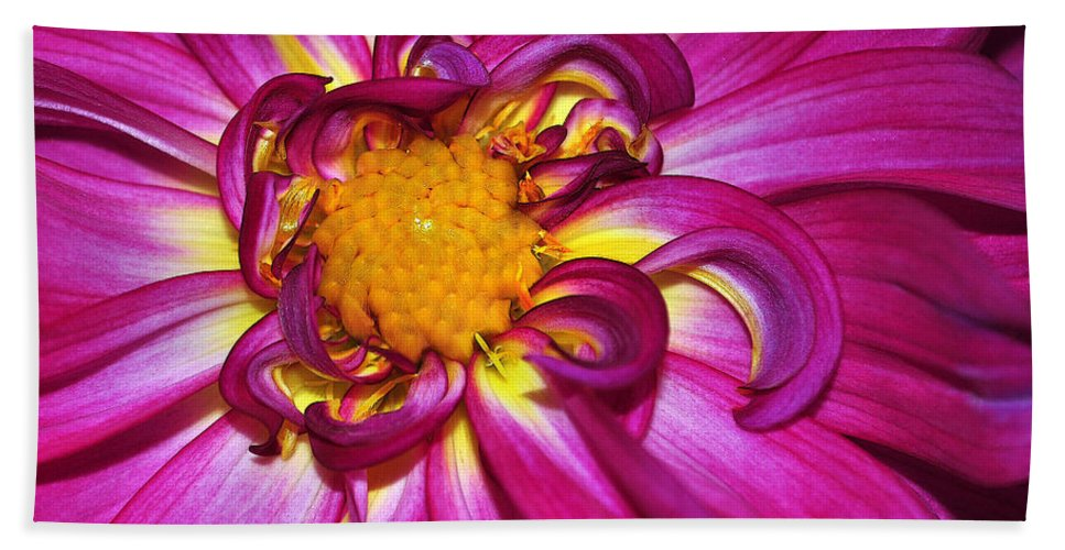 Dahlia Hand Towel featuring the photograph Pink Dahlia by Photos By Cassandra