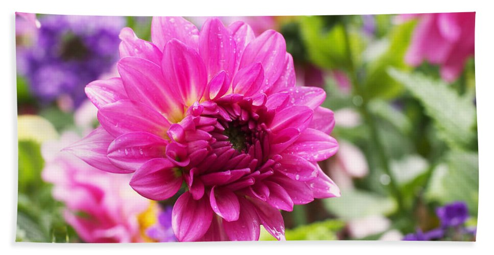 Dahlia Bath Towel featuring the photograph Pink Dahlia by Rona Black