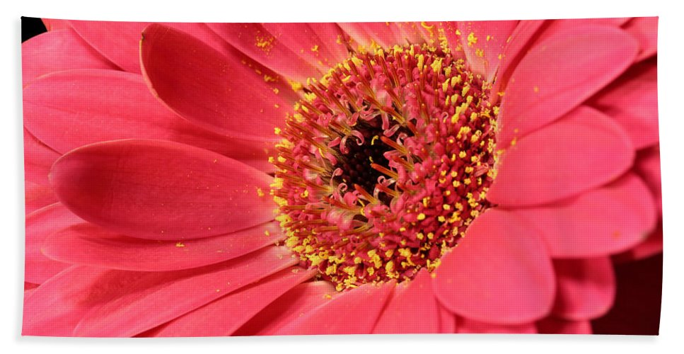 Abloom Bath Sheet featuring the photograph Pink Daisy by Paul Fell