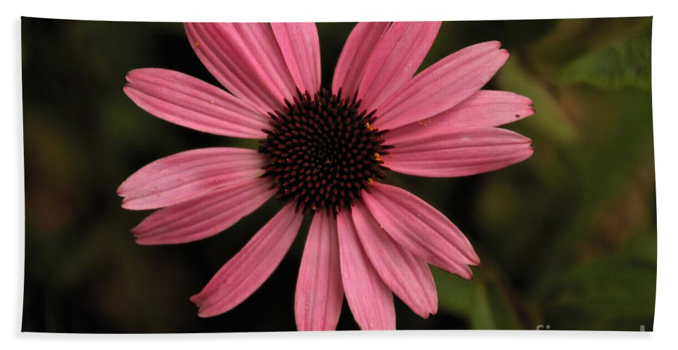 Daisy Hand Towel featuring the photograph Pink Daisy by William Norton
