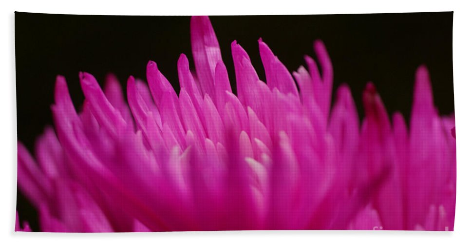 Pink Hand Towel featuring the photograph Pink Fire 3 by Carol Lynch