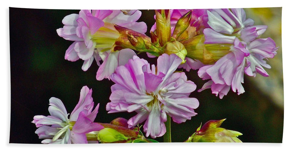 Pink Flower On Brier Island In Digby Neck Hand Towel featuring the photograph Pink Flower On Brier Island In Digby Neck-ns by Ruth Hager