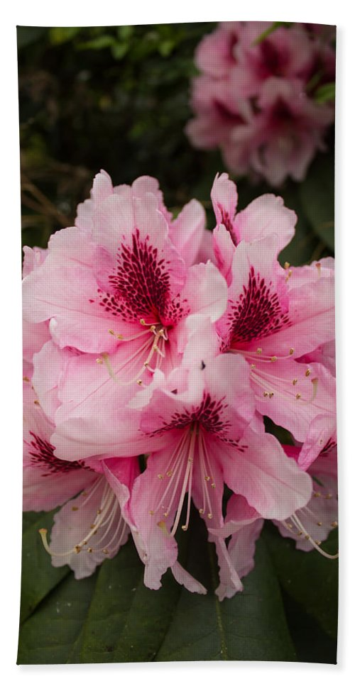 Flower Hand Towel featuring the photograph Pink Flowers In Spring by Martin Newman