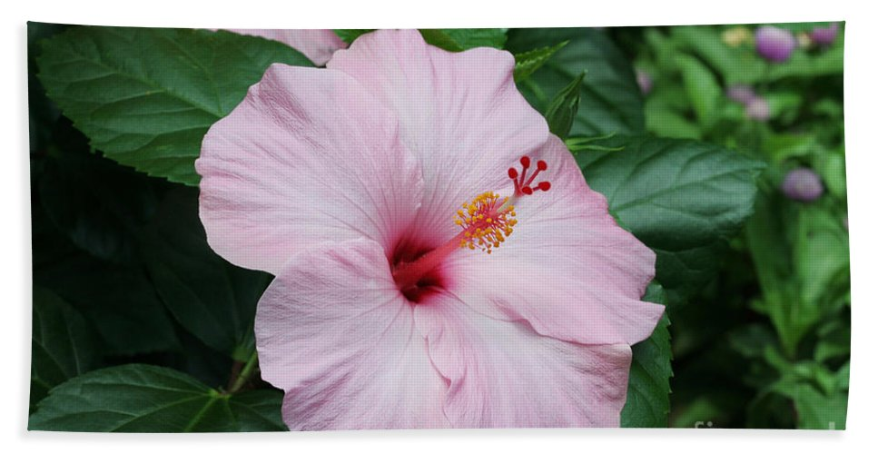 Pink Hibiscus Bath Sheet featuring the photograph Pink Hibiscus #3 by Judy Whitton