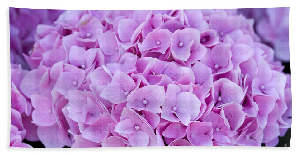 Hydrangea Hand Towel featuring the photograph Pink Hydrangea by Lee Avison