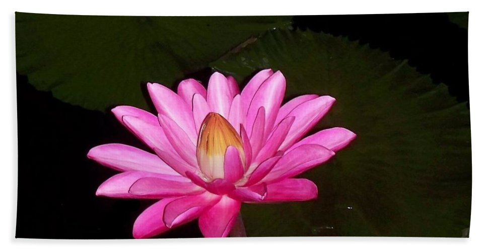 Pink Lilies Hand Towel featuring the photograph Pink Lilies And Pads by Eric Schiabor