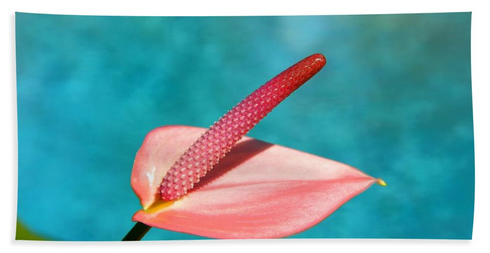 Pool Hand Towel featuring the photograph Pink Lily by Darren Burton