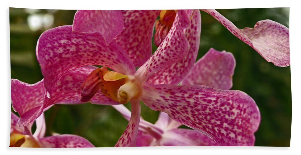 Mokara Orchid Hand Towel featuring the photograph Pink Orchid by Howard Stapleton