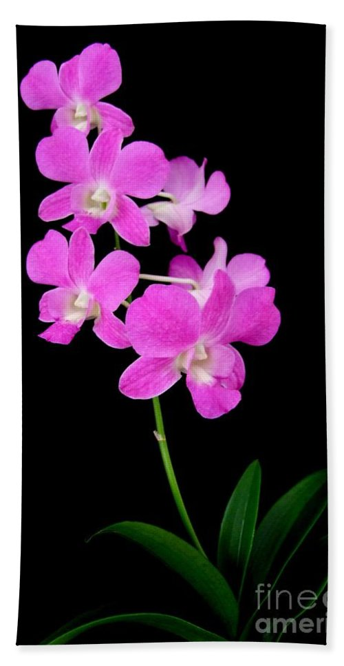 Orchid Bath Sheet featuring the photograph Pink Orchids 9 by Mary Deal