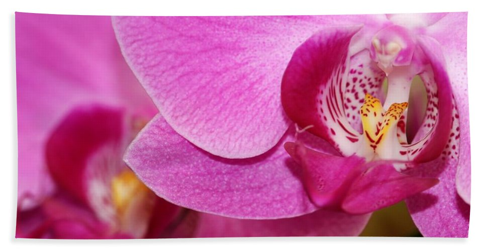 Orchid Hand Towel featuring the photograph Pink Orchids by Sabrina L Ryan