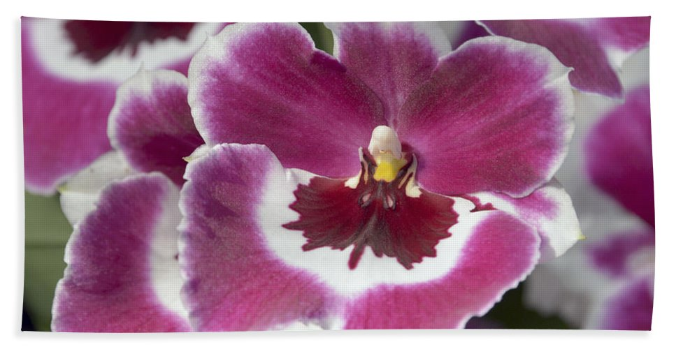 Orchid Hand Towel featuring the photograph Pink Pansy Orchid by Terri Winkler