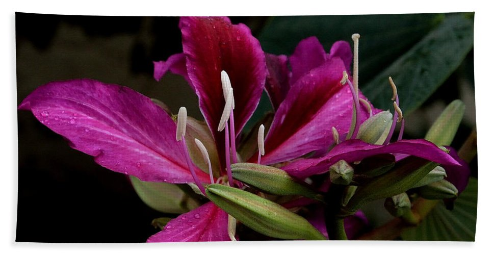 Hong Kong Orchid Hand Towel featuring the photograph Pink Passion by Lorraine Harrington
