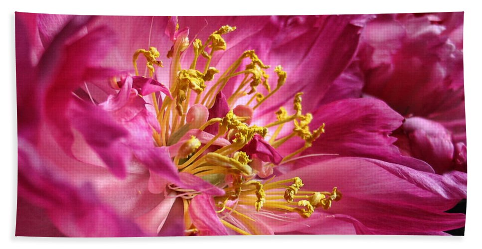 Peony Hand Towel featuring the photograph Pink Peony Flower Macro by Jennie Marie Schell