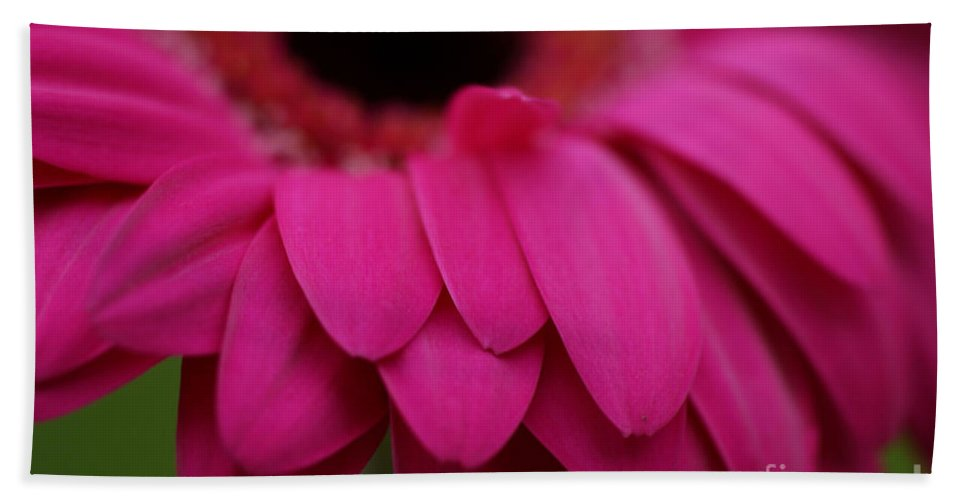 Pink Hand Towel featuring the photograph Pink Petals by Carol Lynch