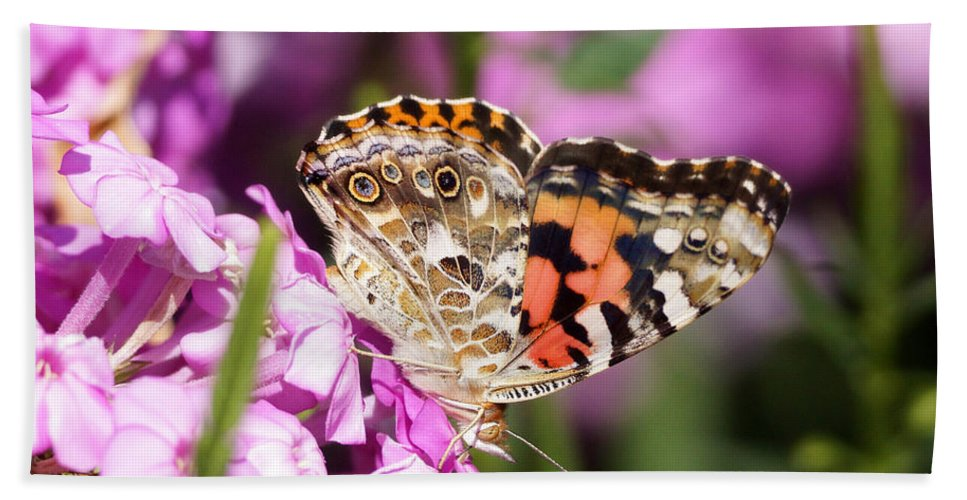 Butterfly Bath Sheet featuring the photograph Pink Phlox With Butterfly by Lori Tordsen