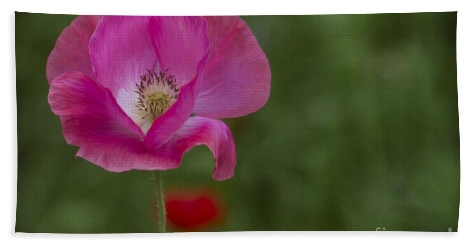 Clare Bambers Bath Sheet featuring the photograph Pink Poppy. by Clare Bambers