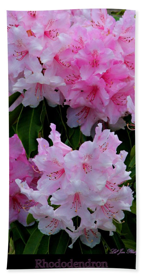 Flower Bath Sheet featuring the photograph Pink Rhododendrons by Jeanette C Landstrom