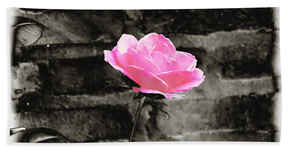 Pink Bath Sheet featuring the photograph Pink Rose In Black And White by Bill Cannon