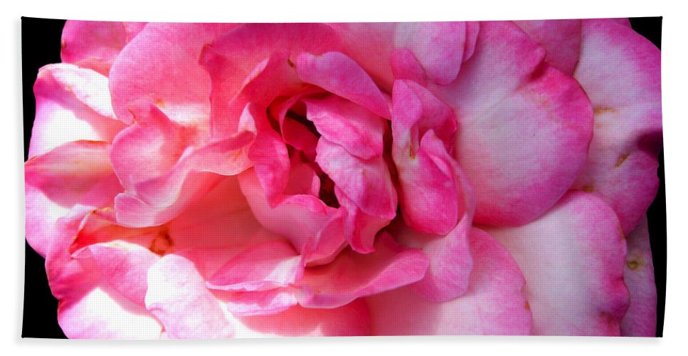 Pink Rose Bath Sheet featuring the photograph Rose With Touch Of Pink by Nina Ficur Feenan