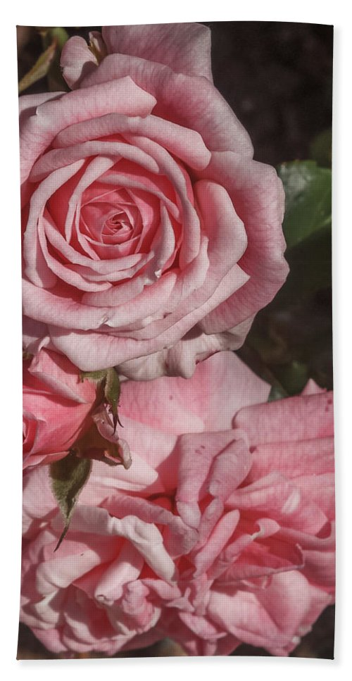 Florida Bath Sheet featuring the photograph Pink Roses by Jane Luxton