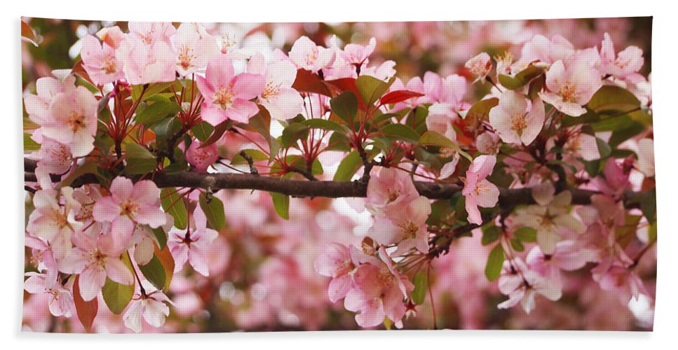 Apple Blossoms Hand Towel featuring the photograph Pink Spring Apple Blossoms by Angie Rea