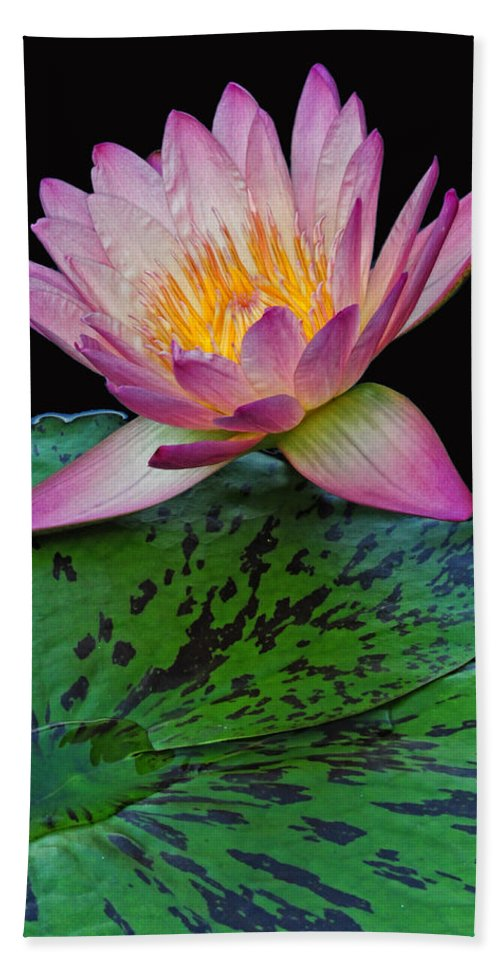 Waterlily Hand Towel featuring the photograph Pink Tipped Beauty by Dave Mills