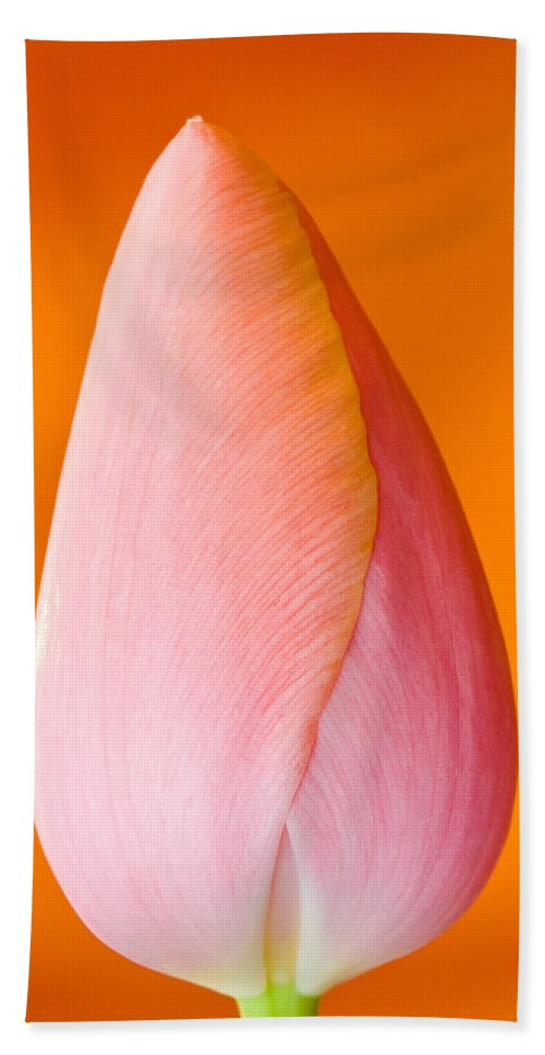 Blub Flowers Bath Sheet featuring the photograph Pink Tulip by CJ Middendorf