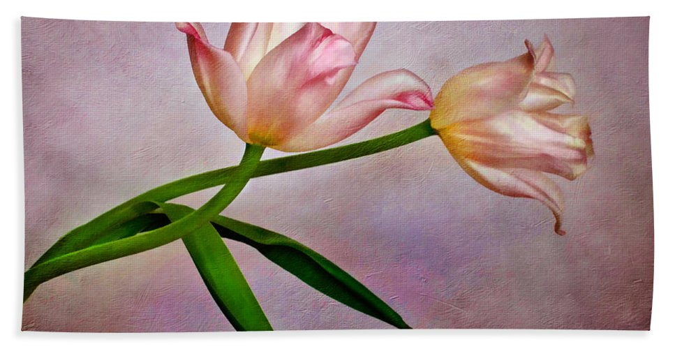 Bloom Hand Towel featuring the photograph Pink Tulips by David and Carol Kelly