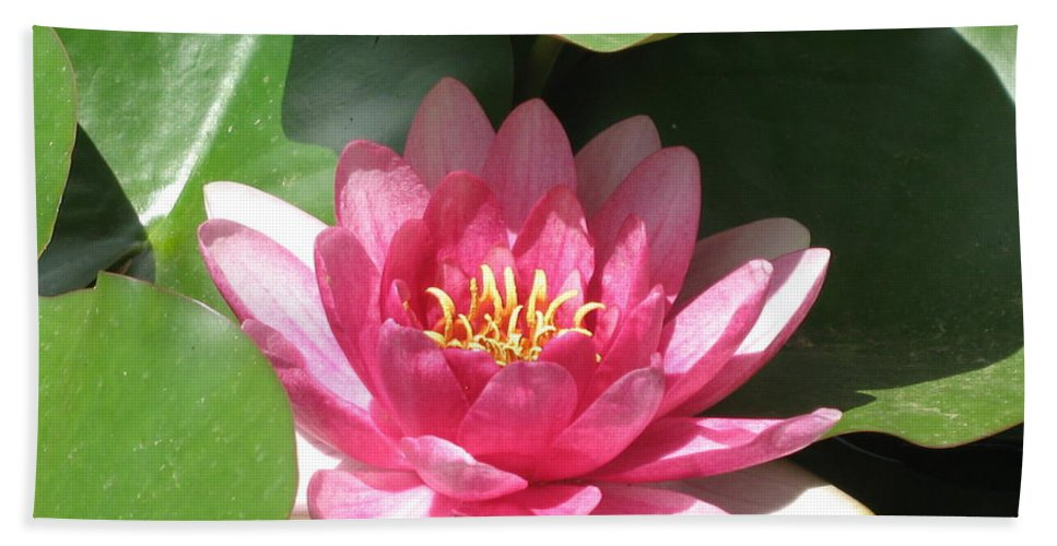 Waterlily Hand Towel featuring the photograph Pink Waterlily by Christiane Schulze Art And Photography