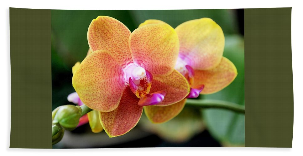 Orchid Bath Sheet featuring the photograph Pink Yellow Orchid by Rona Black