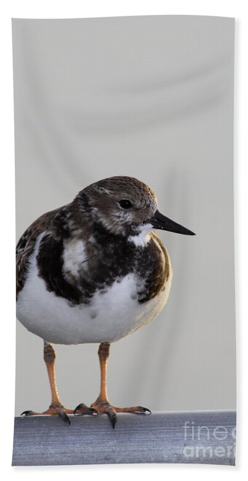 Ruddy Turnstone Hand Towel featuring the photograph Ruddy Turnstone by Christiane Schulze Art And Photography