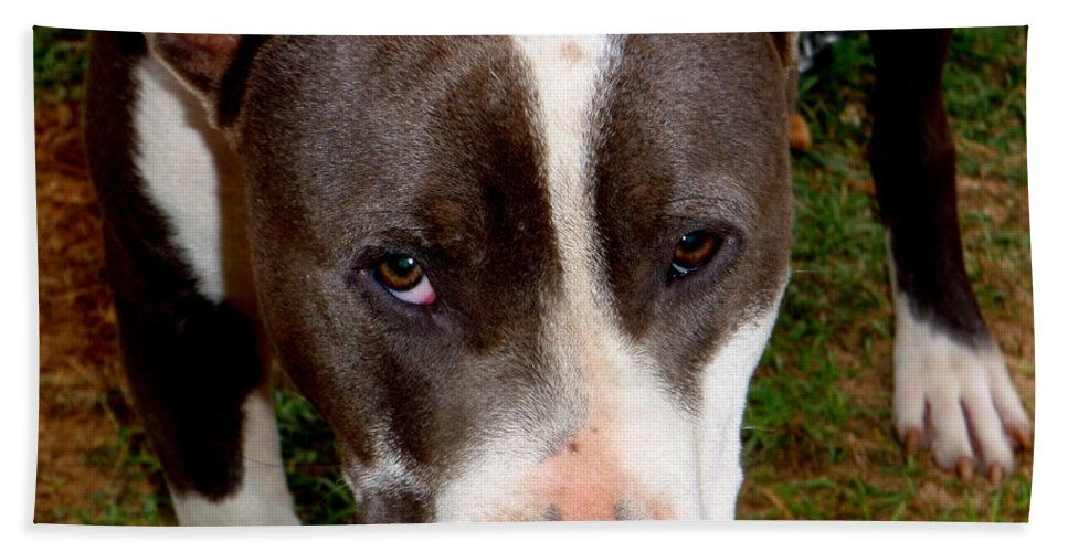Brown Bath Sheet featuring the photograph Pit Bull - 2 by Mary Deal