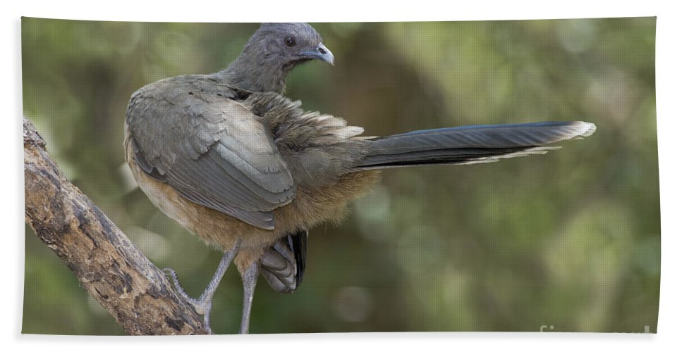 Plain Chachalaca Hand Towel featuring the photograph Plain Chachalaca by Anthony Mercieca