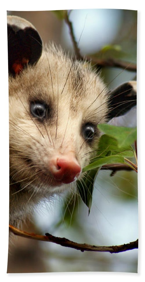 Animals Hand Towel featuring the photograph Playing Possum by Nikolyn McDonald
