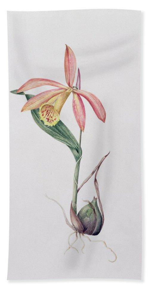 Orchid Hand Towel featuring the painting Pleione Zeus Wildstein by Mary Kenyon-Slaney