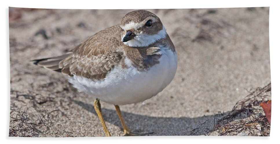 Festblues Bath Sheet featuring the photograph Plover Lover.. by Nina Stavlund