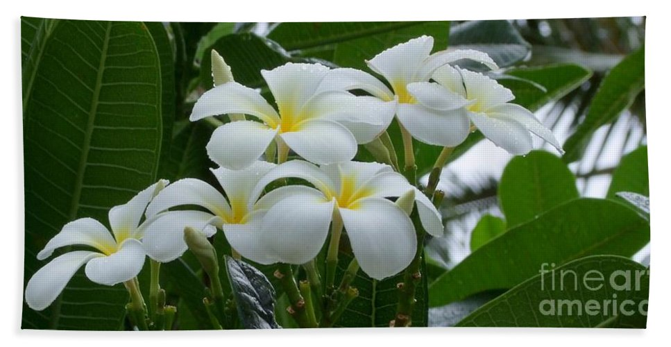 Plumeria Hand Towel featuring the photograph Plumeria In The Rain by Mary Deal