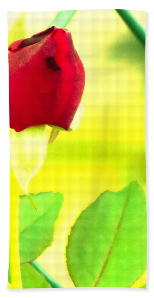 Rose Hand Towel featuring the photograph Poetry by Sonali Gangane