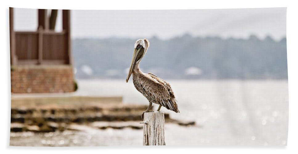 Pelican Hand Towel featuring the photograph Point Clear by Scott Pellegrin