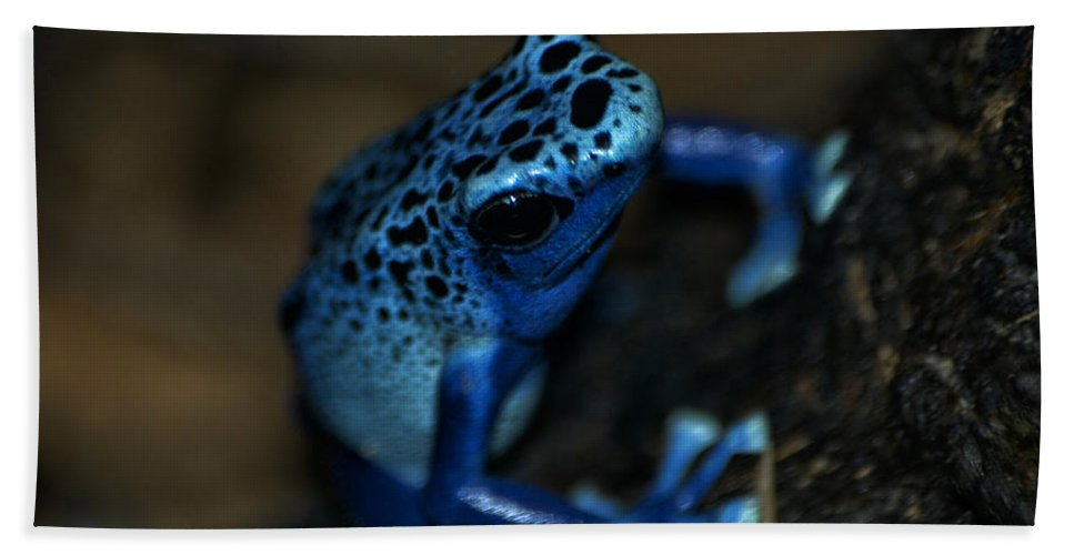 Animals Hand Towel featuring the digital art Poisonous Blue Frog 02 by Thomas Woolworth