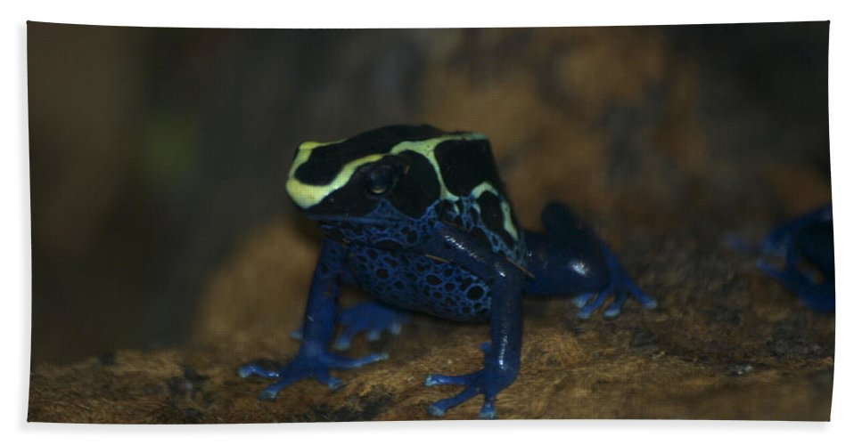 Animals Hand Towel featuring the photograph Poisonous Frog 02 by Thomas Woolworth