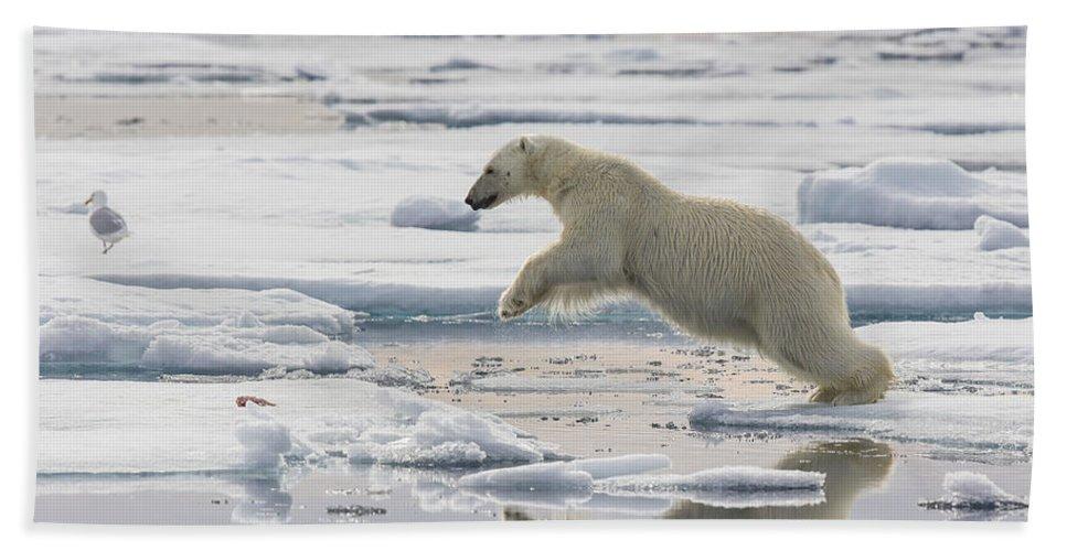 Nis Bath Towel featuring the photograph Polar Bear Jumping by Peer von Wahl