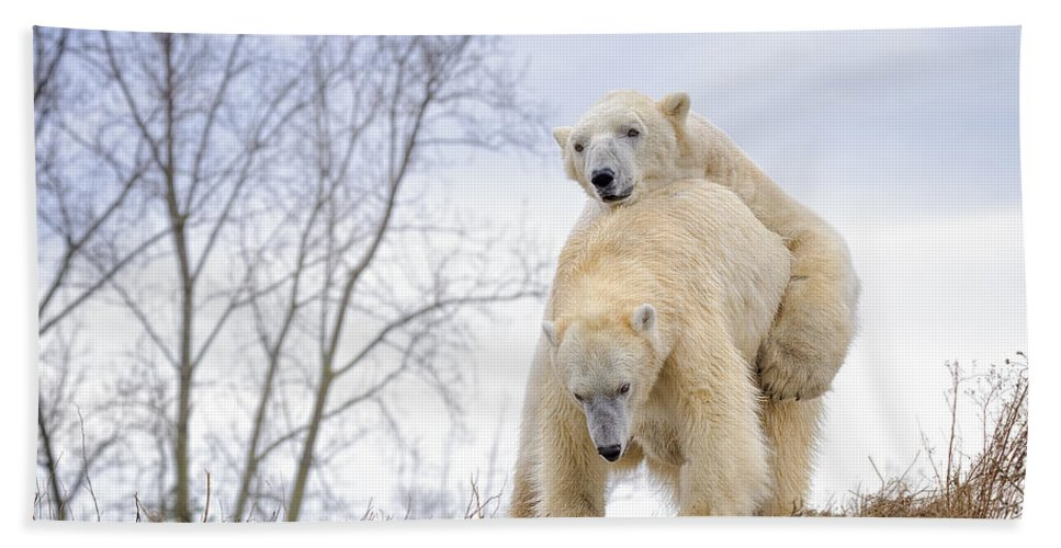 Polar Bear Hand Towel featuring the photograph Polar Bear Spring Fling by LeeAnn McLaneGoetz McLaneGoetzStudioLLCcom