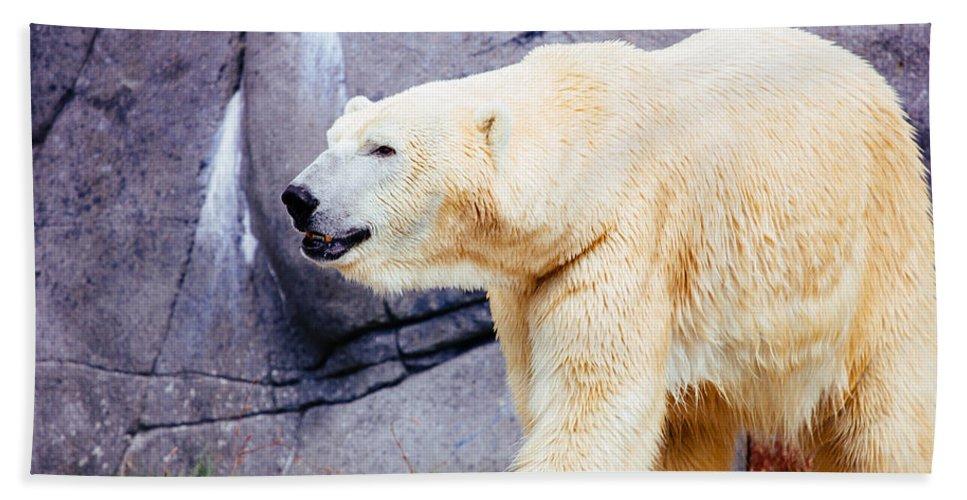 Arctic Bath Sheet featuring the photograph Polar Bear Walking by Pati Photography
