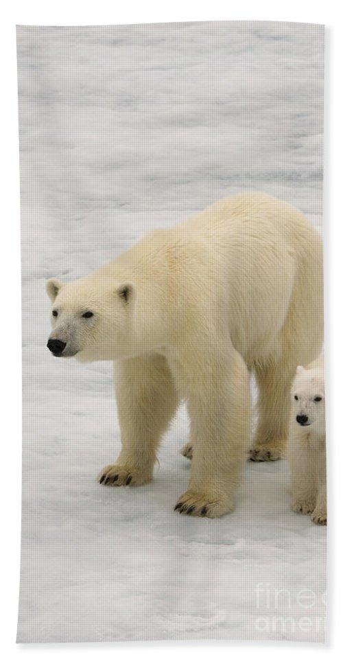 Polar Bear Cub Bath Sheet featuring the photograph Polar Bear With Cub by John Shaw