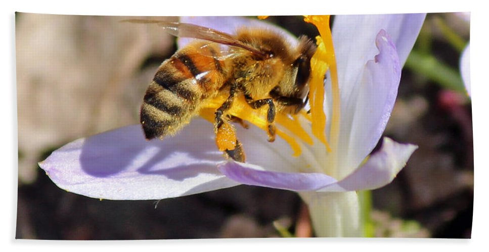 Bee Bath Sheet featuring the photograph Pollinated by Jamie Smith